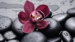 orchid_on_the_rocks_iii-1024x576