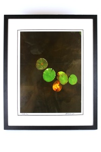 J. Anderson, Lily Pads, Framed Photo