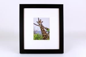 Stan Oaks, Framed Giraffe Photo
