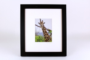 Stan Oaks, Framed Giraffe Photo