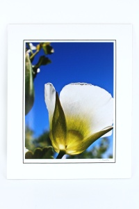 JB Anderson Large Tulip Photo, Archival Ink & Paper